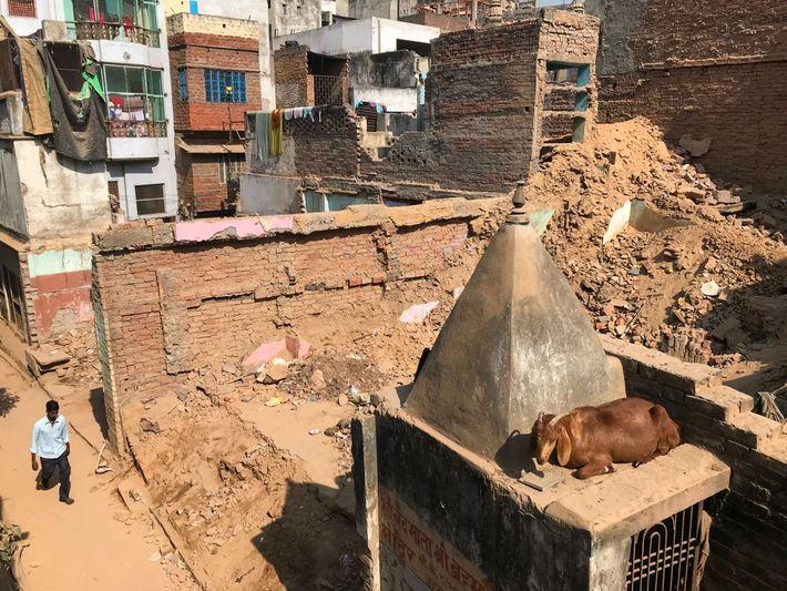 Dans la ville, les bâtiments s'abaissent, devenant un perchoir de choix pour les chèvres du quartier.