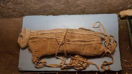 Des momies de lions extrêmement rares découvertes en Égypte
