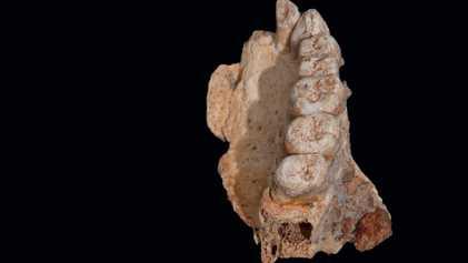 Découverte du plus vieux fossile humain hors d'Afrique