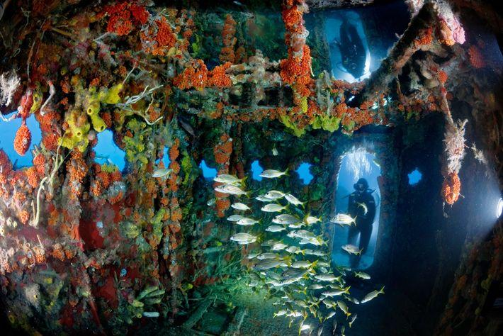 Cette épave au large du Key Largo de Floride est celle d'un navire de l'United States ...