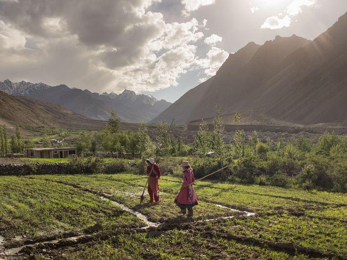 Dans la vallée du Chipursan, au Pakistan, deux femmes cultivent leur champ de pommes de terre. ...