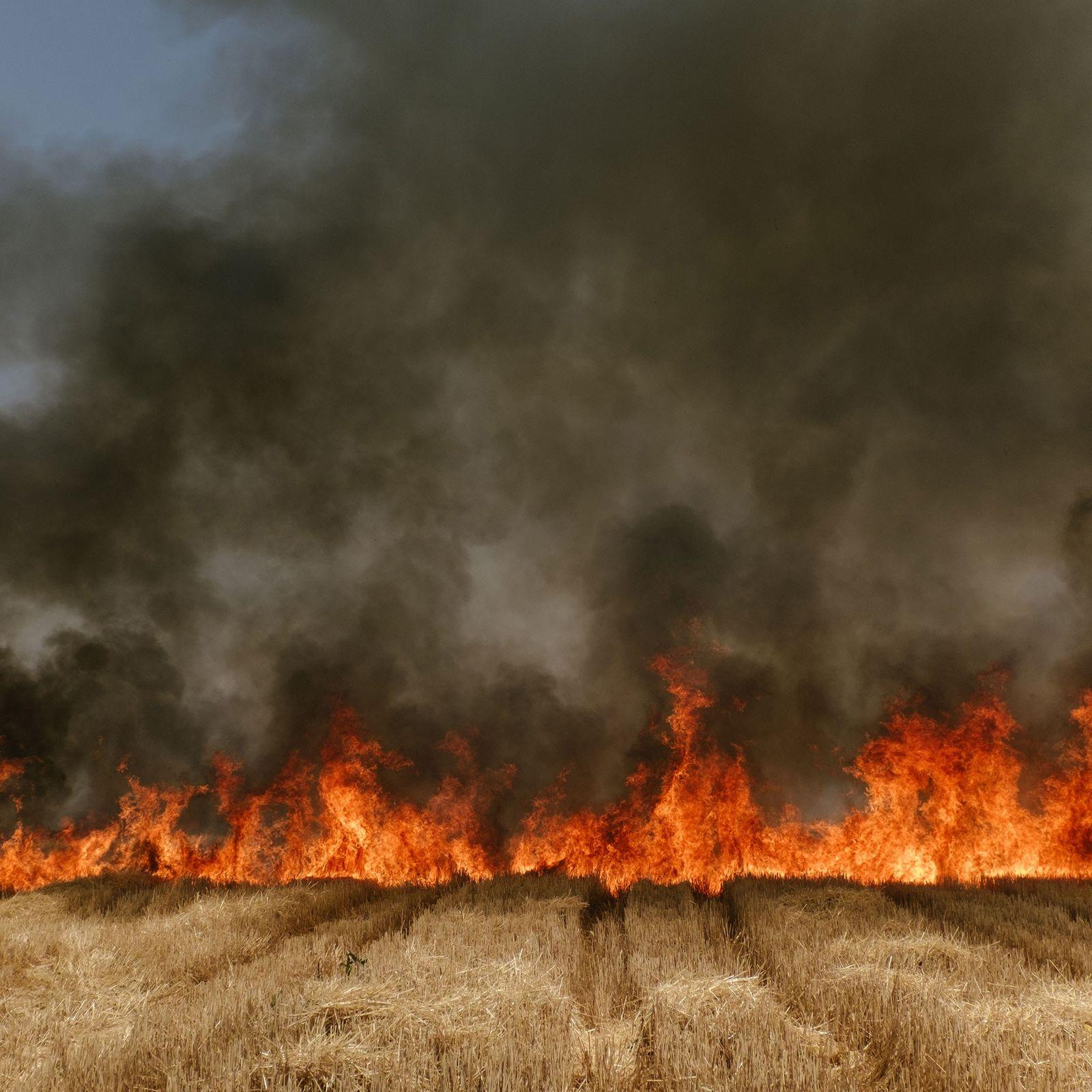 Un incendie fait rage à travers un champ de blé dans l'Etat de Madhya Pradesh, en ...