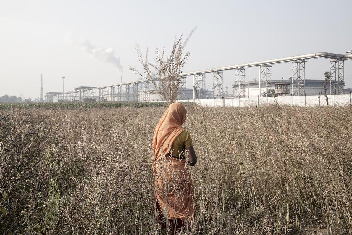Une femme collecte des feuilles de moutarde dans un champ traversant une raffinerie de pétrole le ...