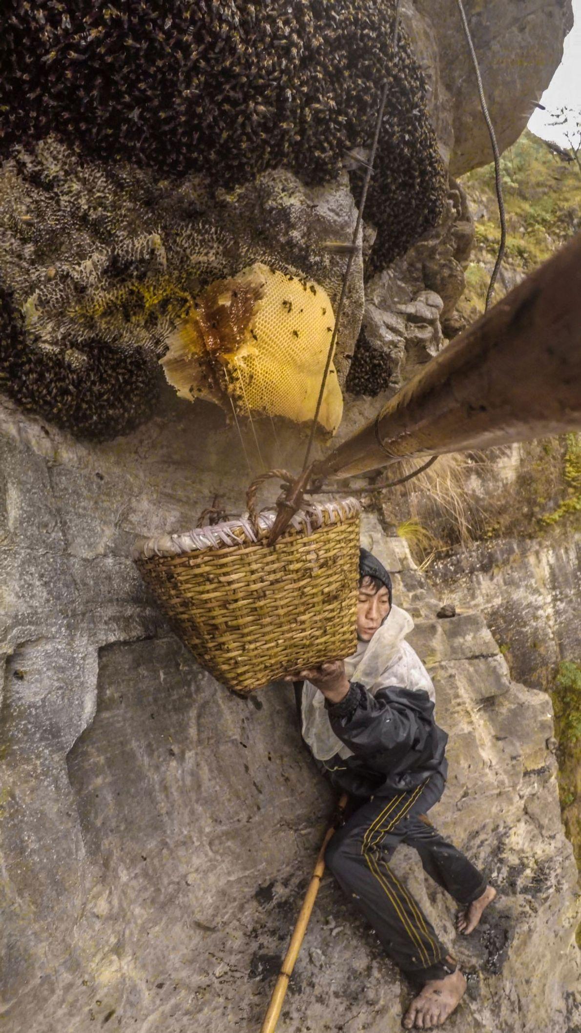 Cette photographie a été prise par un des appareils accroché à la tige de bambou de ...