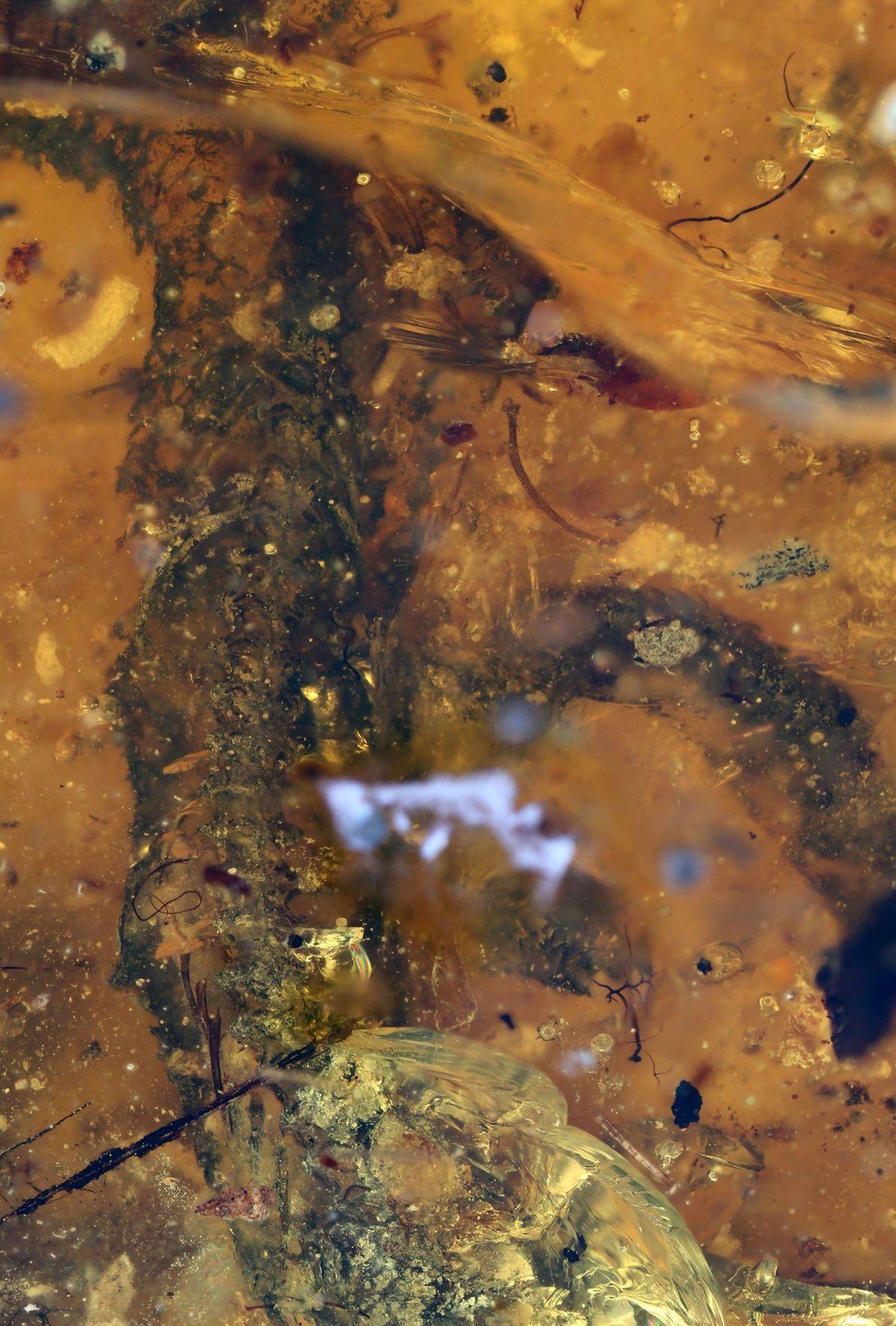 Ce gros plan du ventre du serpent montre des vertèbres exceptionnellement bien conservées.