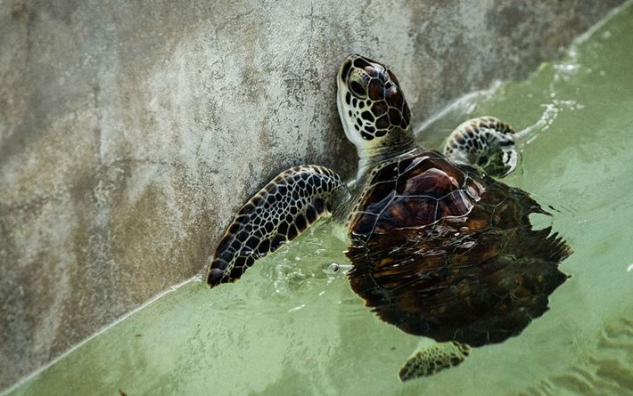 04_turtle_cayman_island