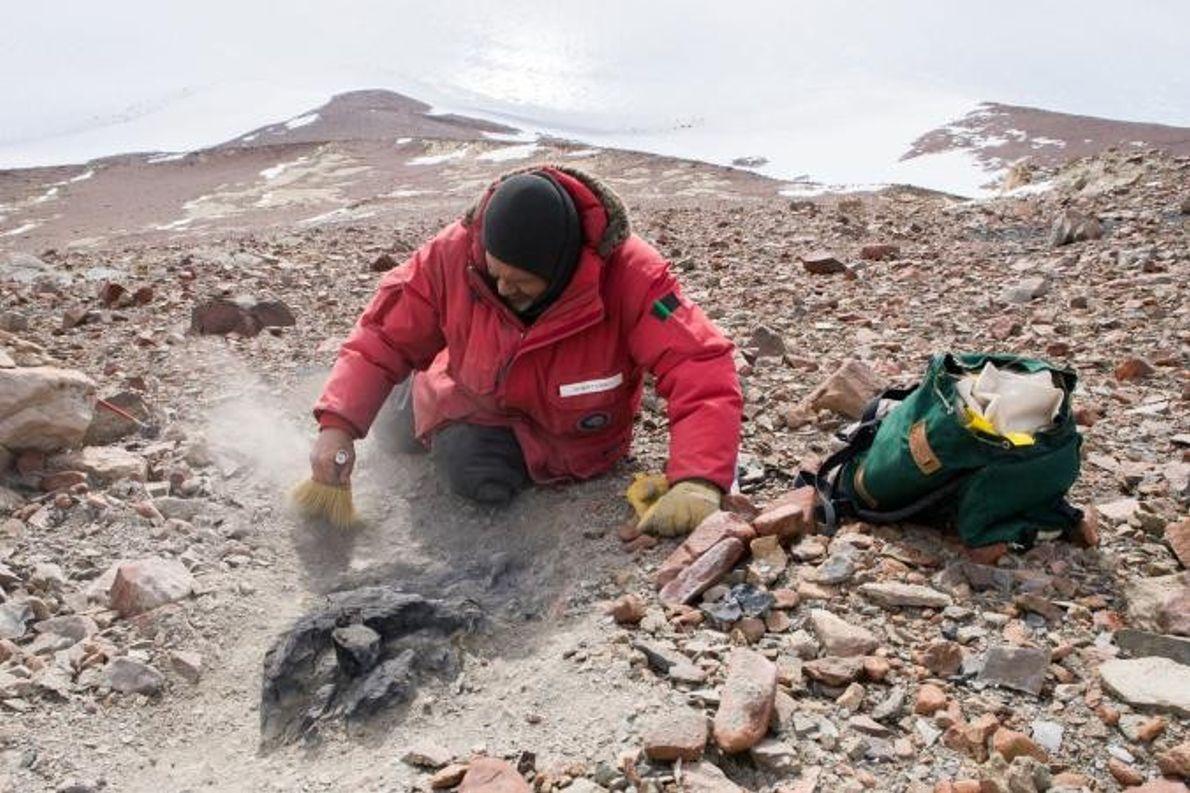Sur les flancs de Graphite Peak, Rudolph Serbet découvre une souche d'arbre fossilisée de 250 millions ...