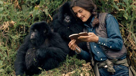 Dian Fossey tenait méticuleusement un registre sur la santé, les relations et les activités de chaque ...