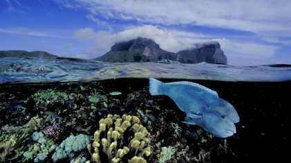 Les récifs coralliens pourraient disparaître avant 2050