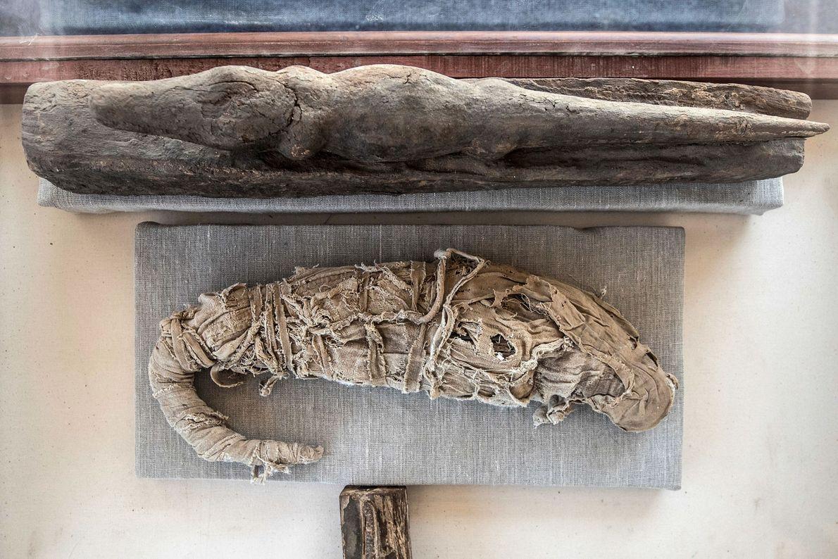 Cette momie de crocodile a également été découverte à Saqqara.
