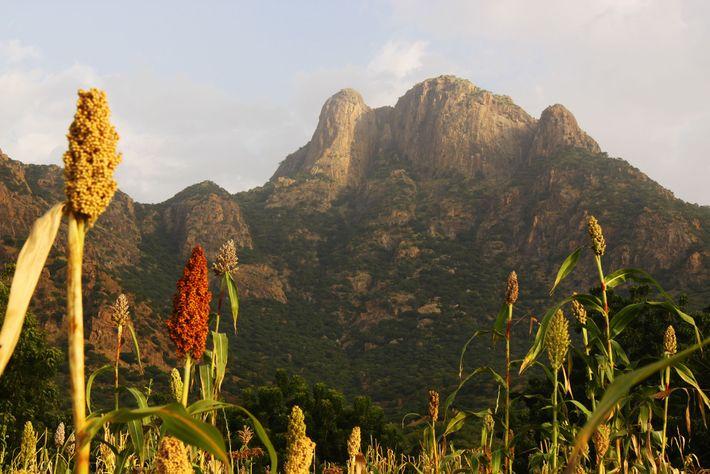 Les montagnes Guera, dans le centre du Tchad, sont certainement un lieu où l'activité de reproduction ...