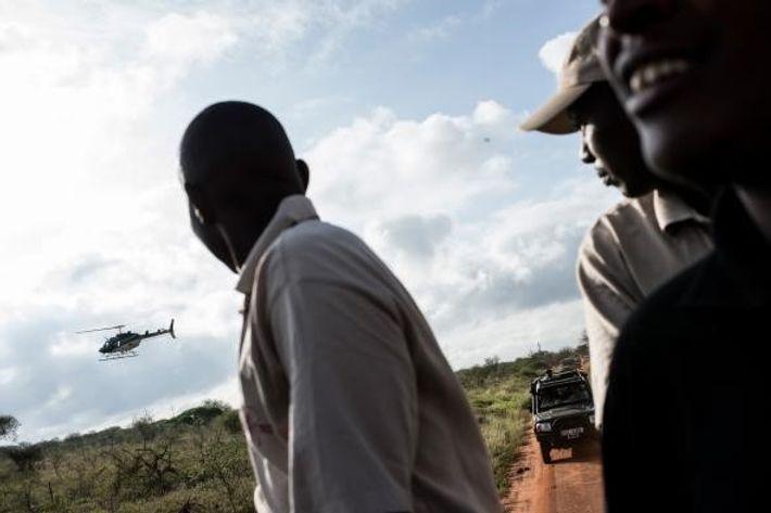 L'équipe de marquage [électronique] se dirige vers l'endroit où un éléphant a été repéré par avion ...