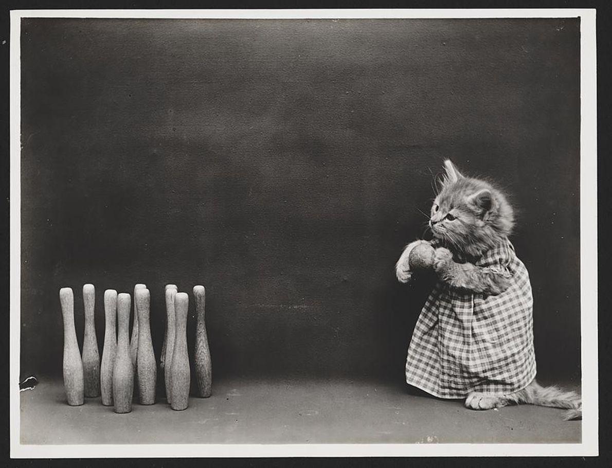 Les humains ne sont pas les seuls à savoir jouer au bowling.