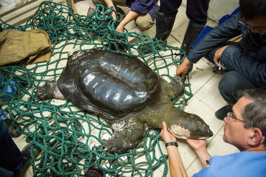 05-rarest-turtle