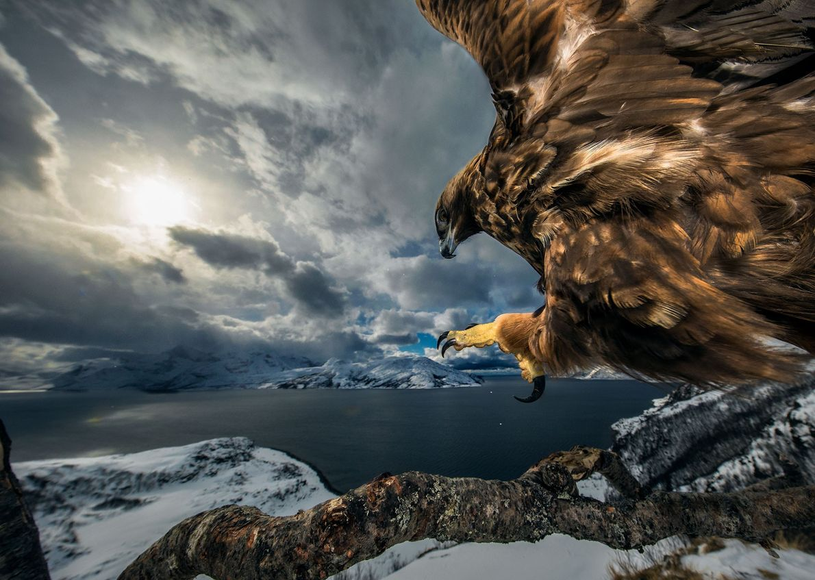 """Le photographe norvégien Audun Rikardson a été distingué dans la catégorie """"oiseaux"""" avec cette photo, prise ..."""