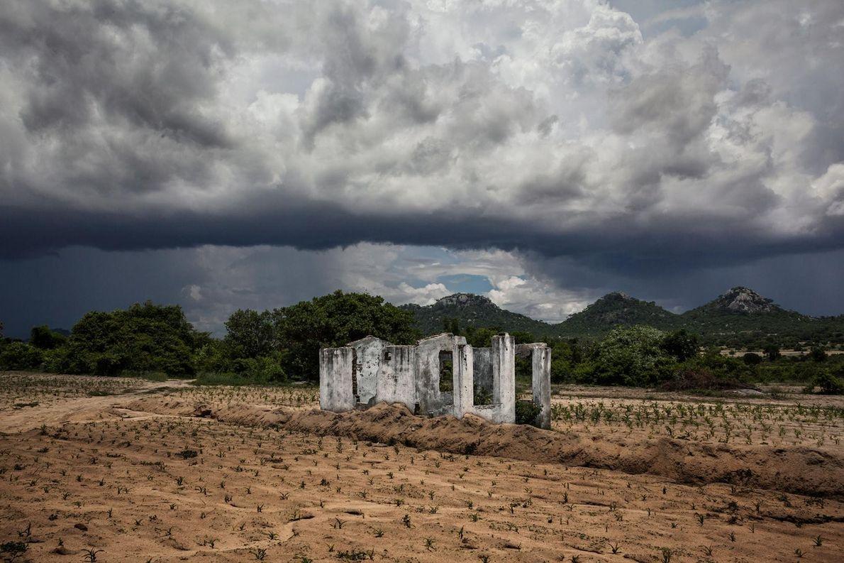 Le maïs a du mal à pousser dans les champs abîmés du Zimbabwe. L'expropriation des exploitations ...