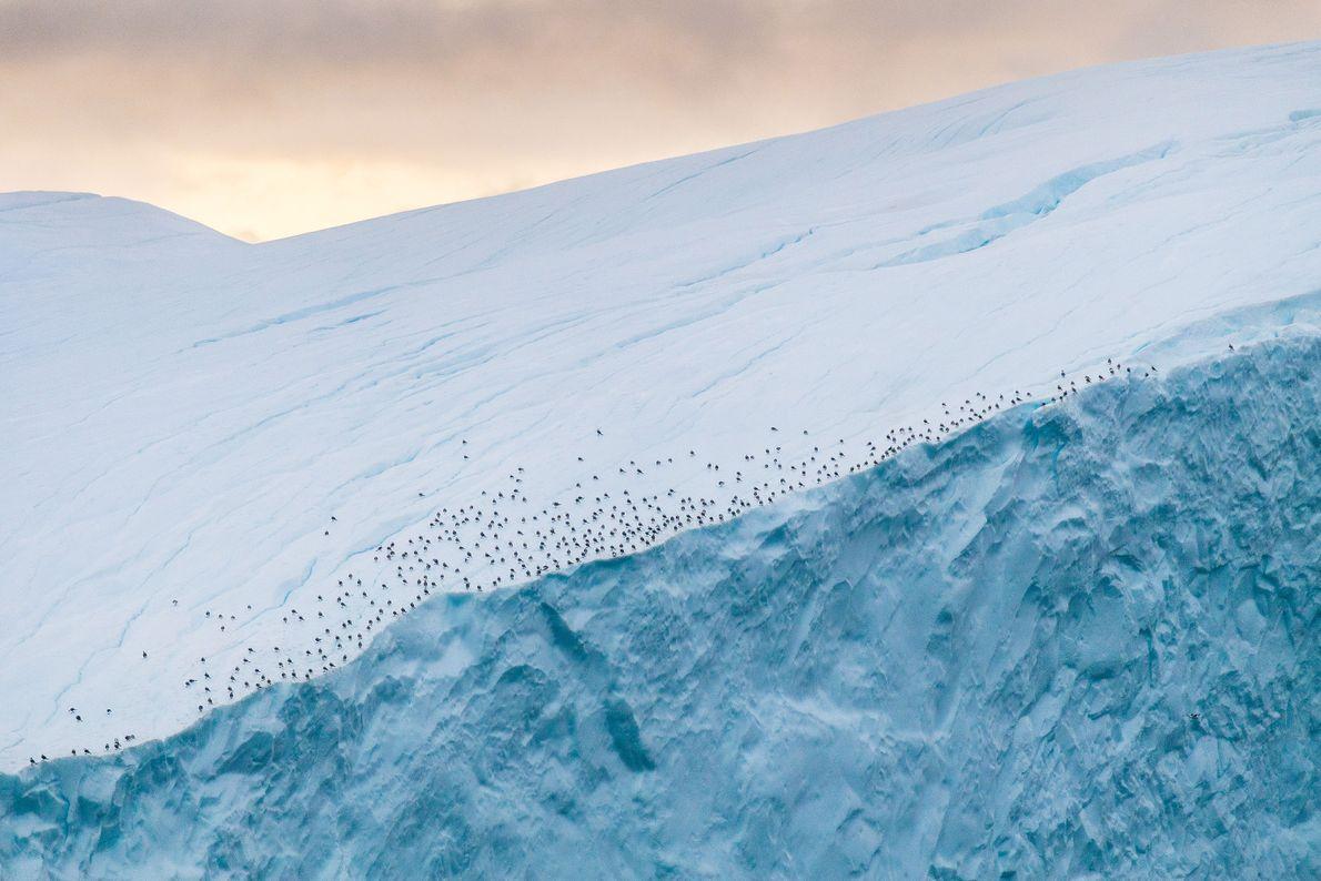 Près du fjord glacé d'Ilulissat, au Groenland, des oiseaux se reposent sur la crête d'un iceberg.