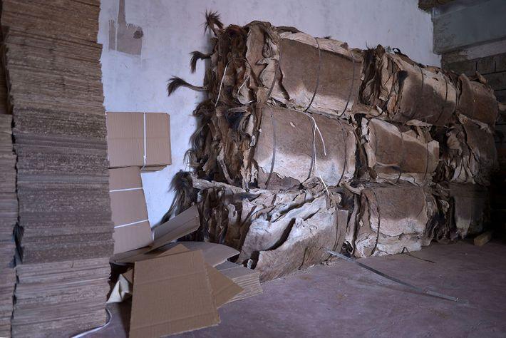 Dans un abattoir agréé, des peaux sont empaquetées et prêtes à être exportées. Elles seront ensuite ...