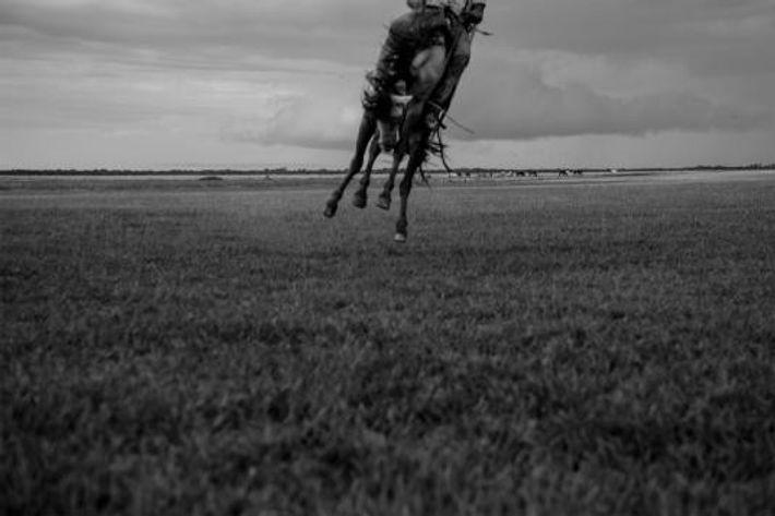 Un llanero tente d'apprivoiser un cheval sauvage. On attribue trois chevaux à chaque llanero. Ceux-ci alternent ...