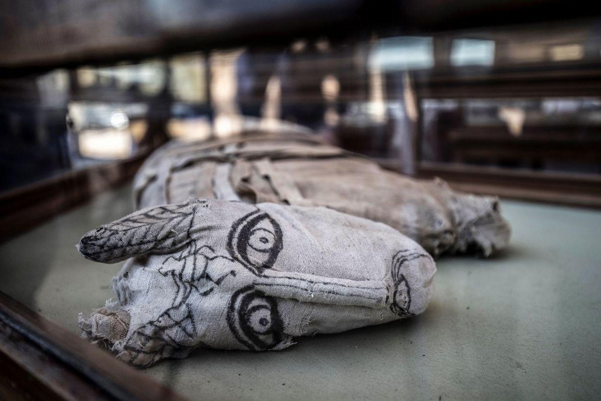 Les lions momifiés ont été découverts à Saqqara, là où ont déjà été trouvées les dépouilles ...