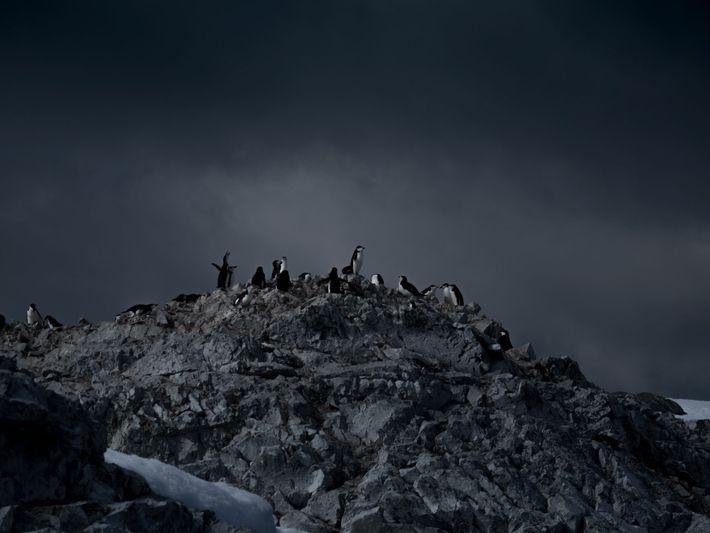 Lors de son voyage en Antarctique, Michaela Skovranova avait pour projet de principalement photographier des pingouins. ...