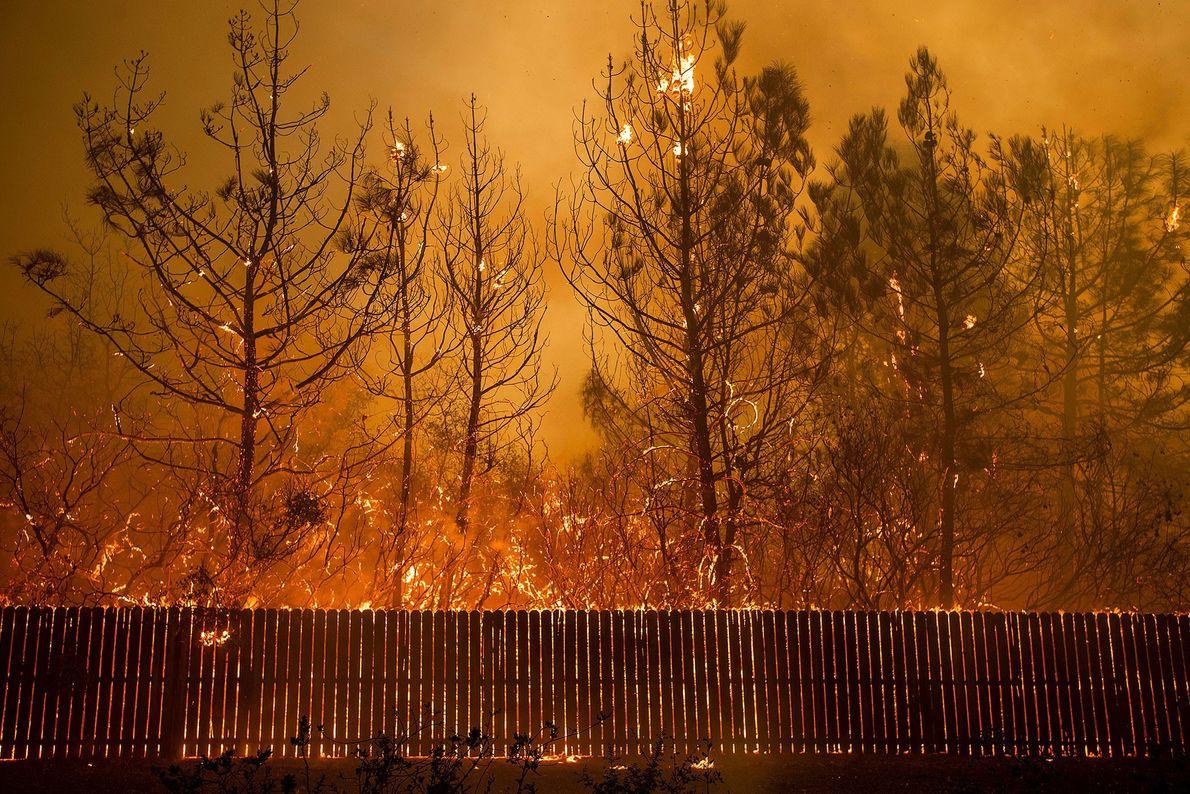 Sur ce cliché datant du 8 novembre, un feu de forêt brûle des arbres à Paradise, ...