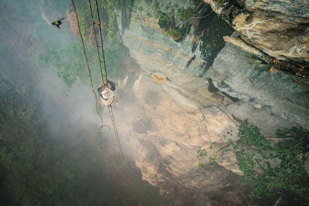 Mauli Dhan se hisse à une centaine de mètres du sol à l'aide d'une échelle en ...