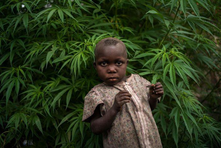 Une jeune fille est entourée de plants de marijuana dans un village qui surplombe le mont ...