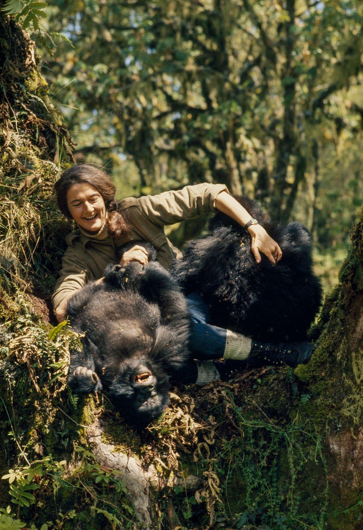 L'approche active et pratique de Dian Fossey en matière de protection a transformé la façon dont ...