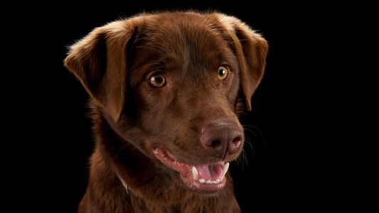 La beauté des chiens en 10 images