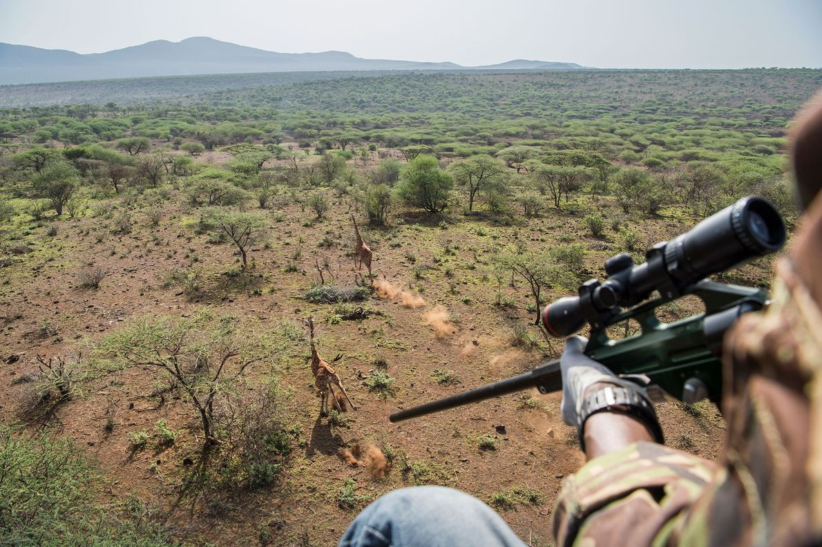 Dans la zone de conservation de Leparua située au nord du Kenya, Mathew Mutinda, vétérinaire du ...