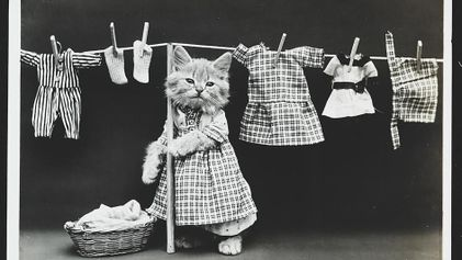 Les chiens et les chats photographiés par Harry Whittier Frees
