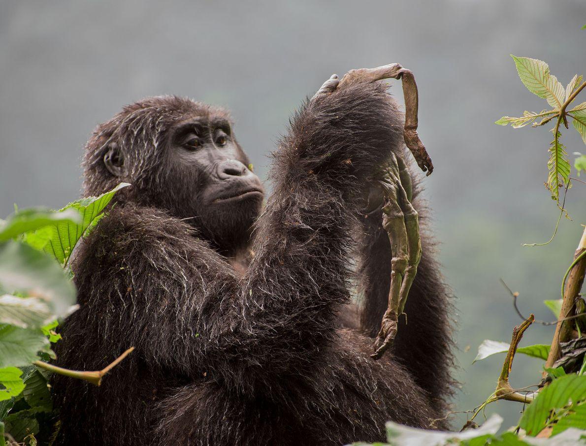 Dans la catégorie « comportement des mammifères », Ricardo Núñez Montero a été récompensé pour ce ...