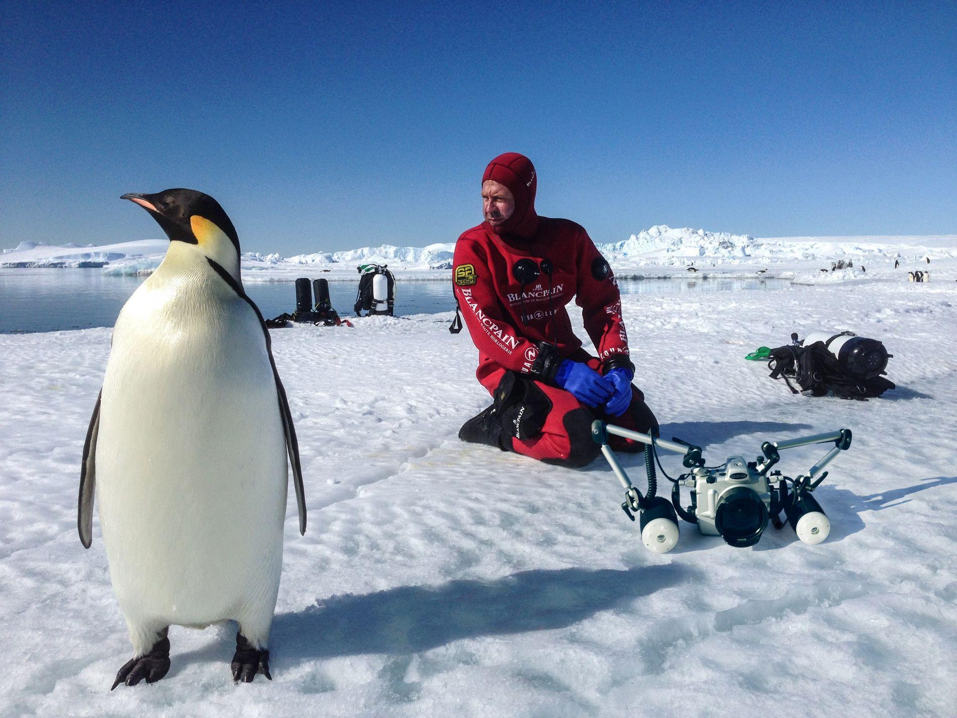Fin 2015, le photographe et biologiste marin, Laurent Ballesta, était en terre Adélie (Antarctique) pour étudier ...