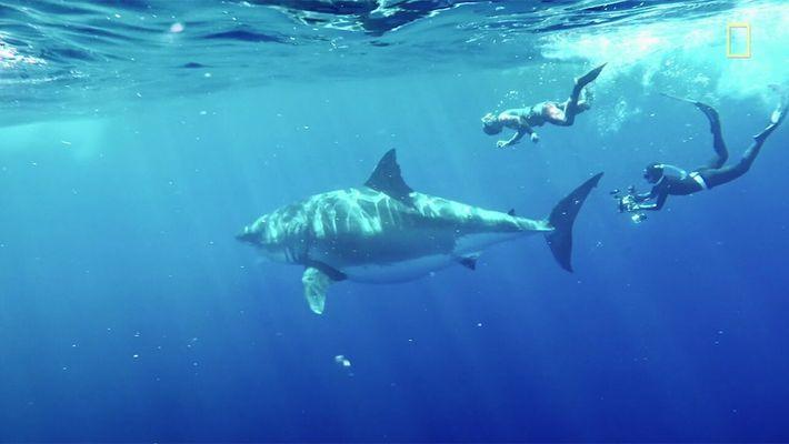 Images inédites du plus grand requin du monde