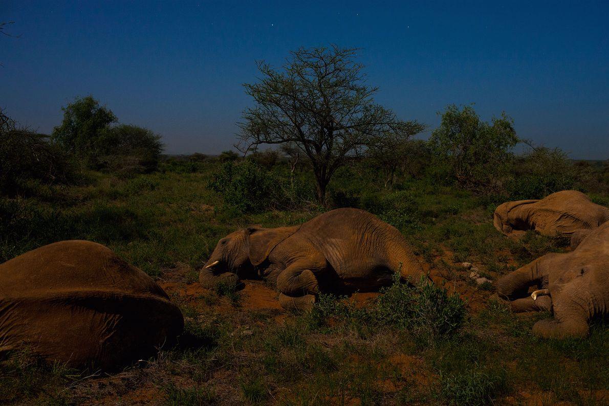 Des éléphants se prélassent au clair de lune.