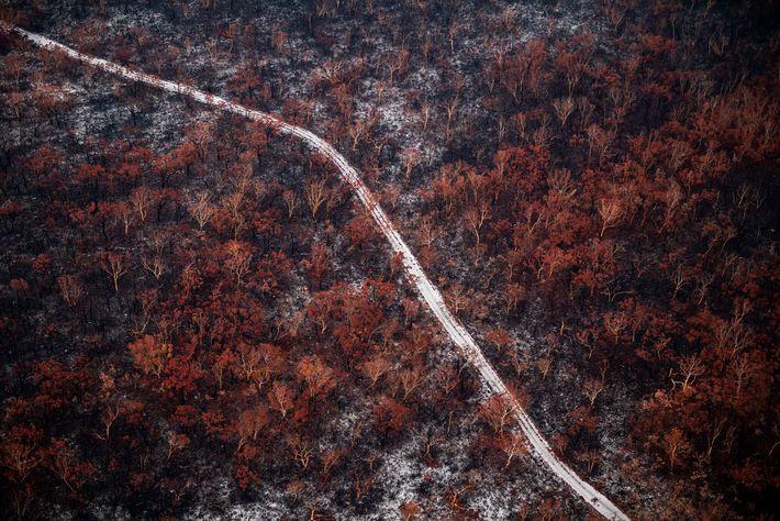 Ce chemin de sable laisse apparaître le sol fragile sur lequel est ancrée la végétation unique ...