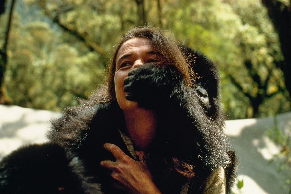 Au moment où Dian Fossey a commencé à étudier les gorilles, la perception collective de ces ...