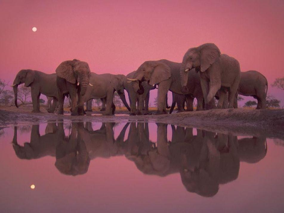 Découvrez les sublimes clichés d'un des meilleurs photographes animaliers au monde