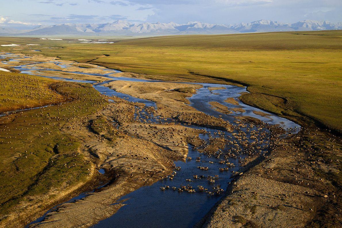 Cet endroit est pour de nombreux rennes le point de départ de leur migration, un voyage ...