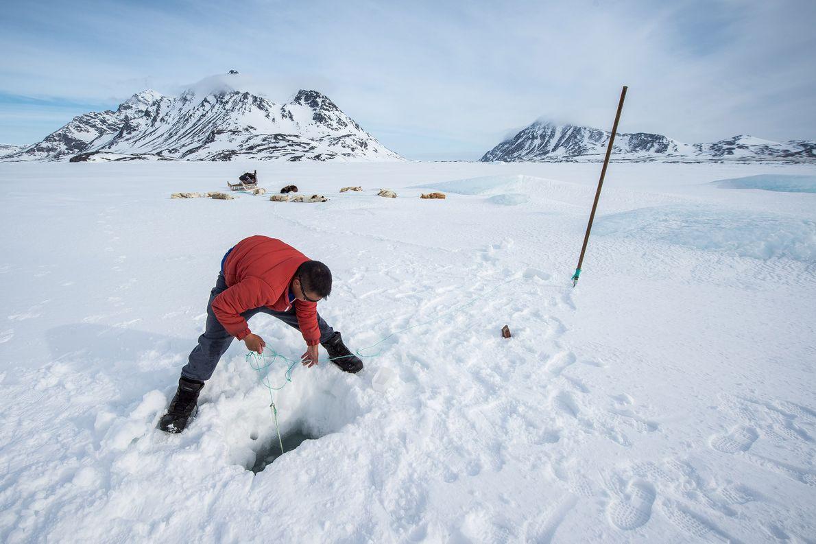 Dans l'est du Groenland, un Inuit chasse. Dans la culture inuit, la chasse occupe une place ...
