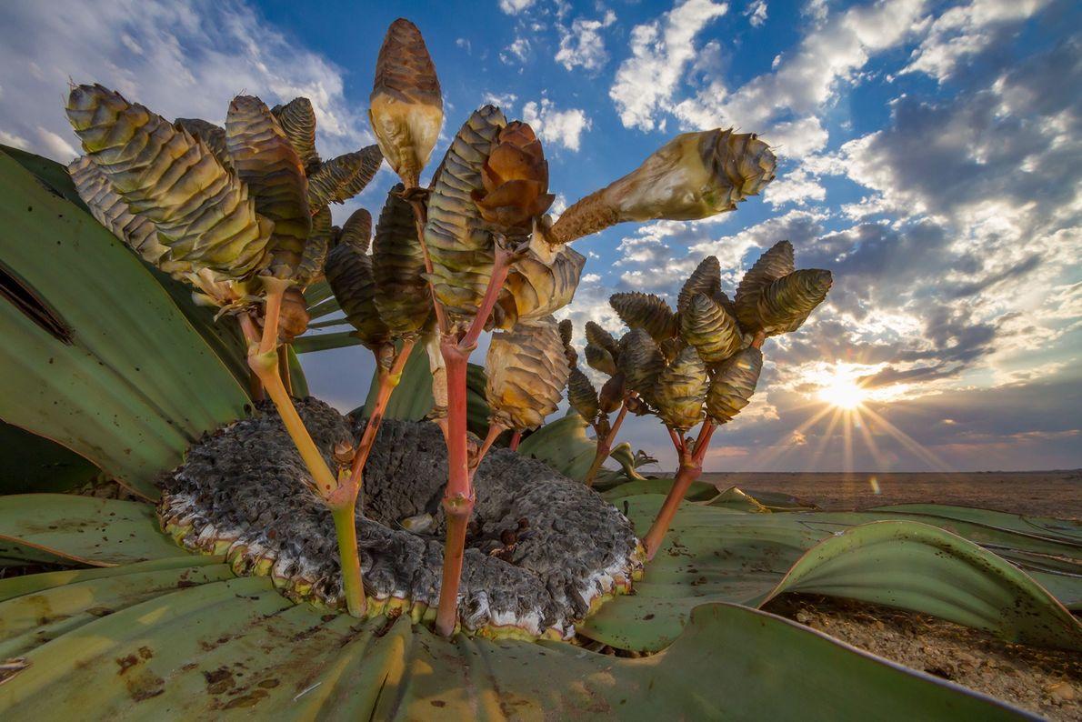 Jen Guyton, explorateur National Geographic, a remporté le prix « Plantes et champignons » avec la ...