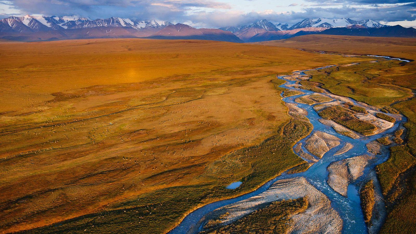 Au printemps et à l'été, la plaine côtière du Refuge faunique national d'Arctique (Arctic National Wildlife ...