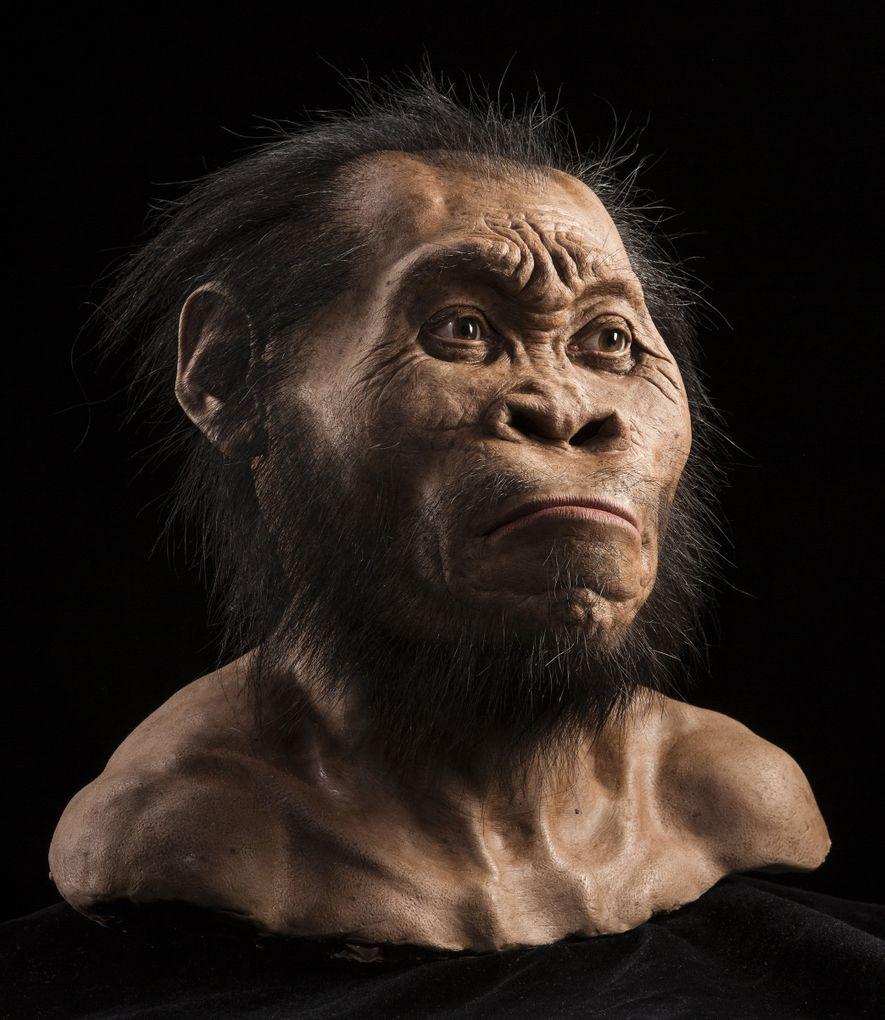 Fait d'argile et coulé en silicone par le paléoartiste John Gurche, le visage de l'Homo naledi ...