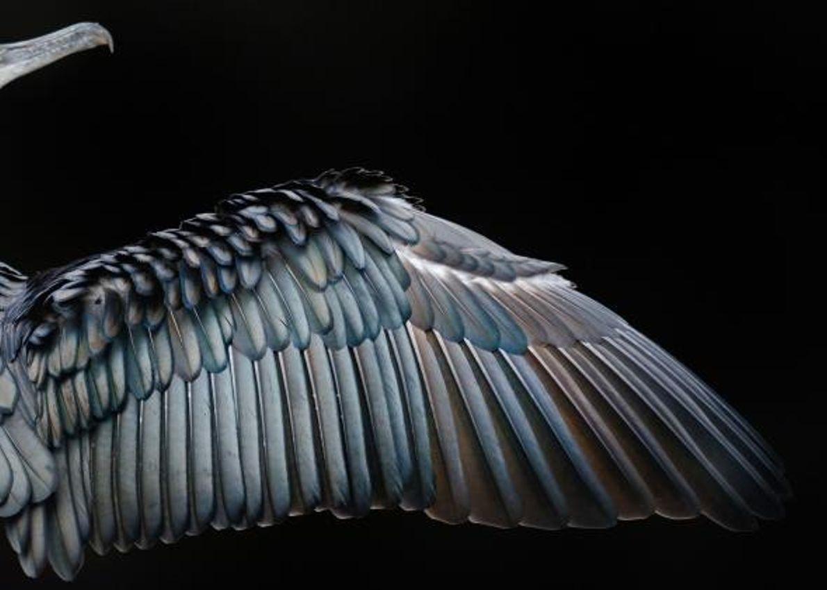 """Premier prix dans la catégorie """"Attention aux détails"""", ce cliché d'un grand cormoran à Hyde Park, ..."""