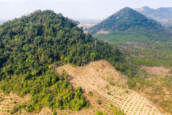 Des forêts défrichées dans la province de Preah Vihear au nord du Cambodge, près de la ...