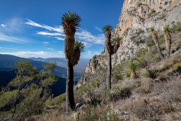 Vue sur la Sierra del Astillero près de l'entrée de la grotte de Chiquihuite. Il y ...
