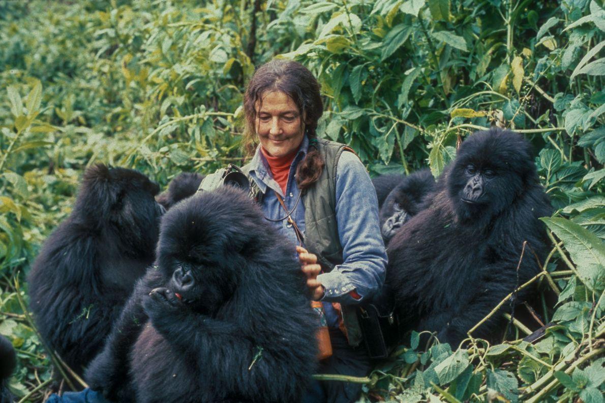 Après avoir imité les comportements et les habitudes des gorilles, notamment leur façon de manger et ...