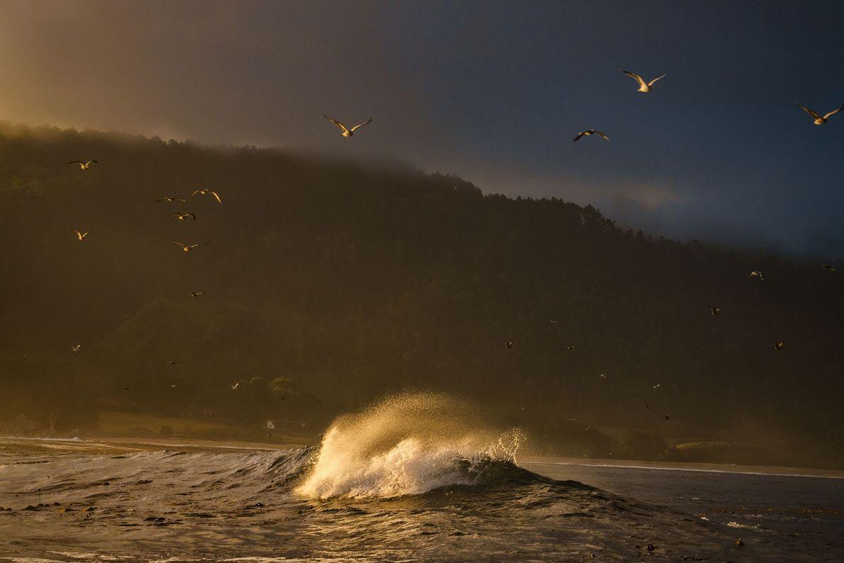 Les mouettes s'envolent pour le grand large au lever du jour à Big Sur, en Californie.