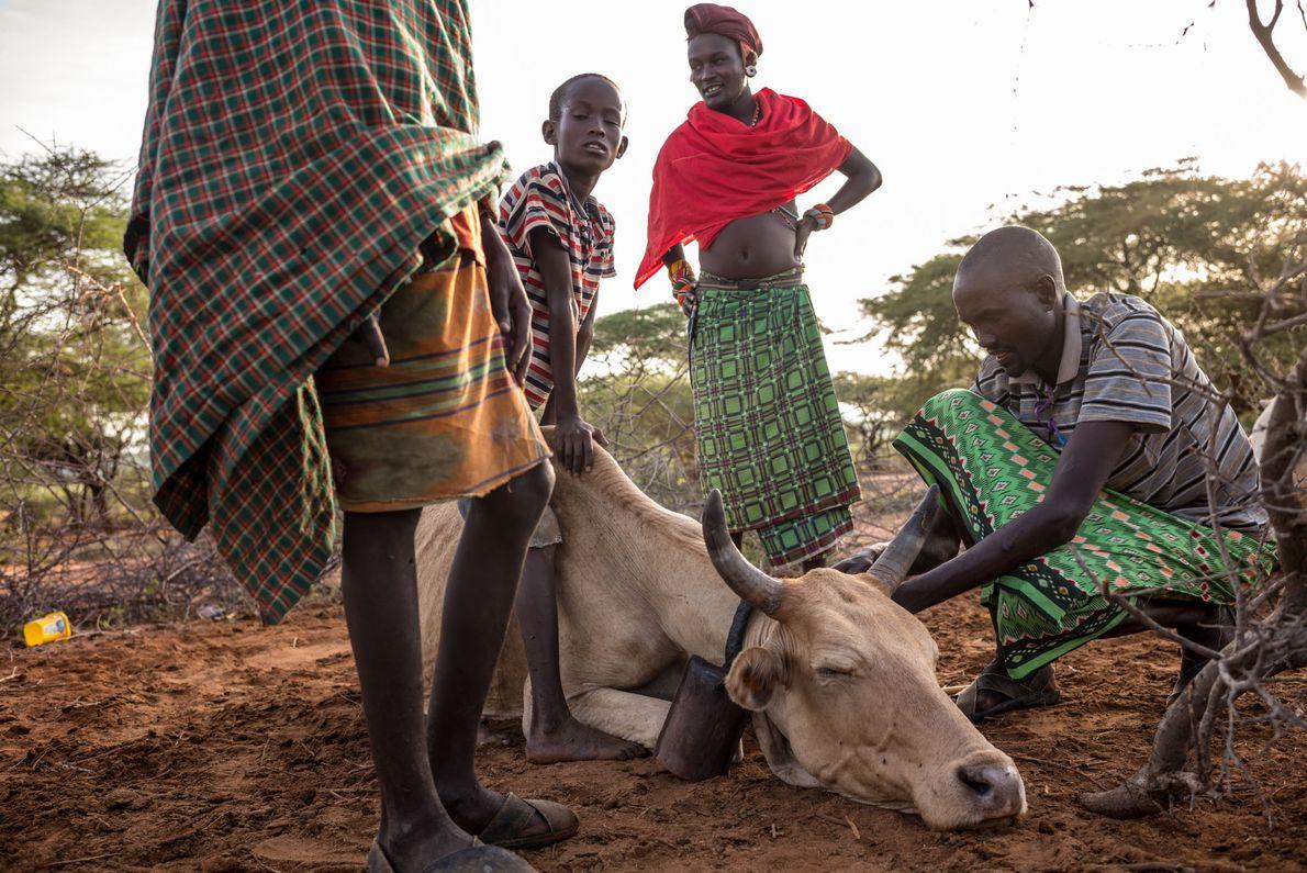 Un guerrier Samburu débute sa journée le bétail. Il prend seulement une bouteille d'eau pour la ...